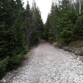 auf dem Weg zum Kickelhahn, Ilmenau, Thüringer Wald