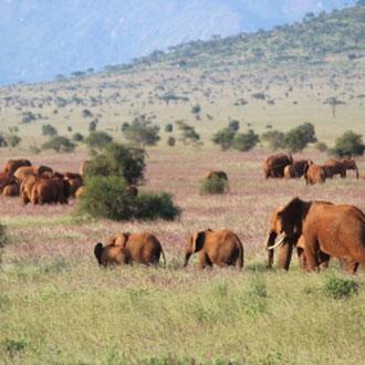 Elefantenherde, Amboseli-Nationalpark, Kenia, Afrika