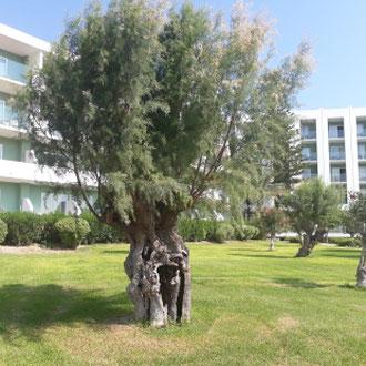 Garten, Hotel Eden Roc, Rhodos