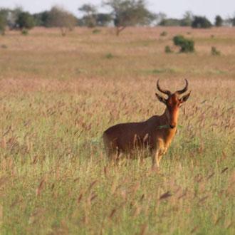 Amboseli-Nationalpark, Kenia, Afrika