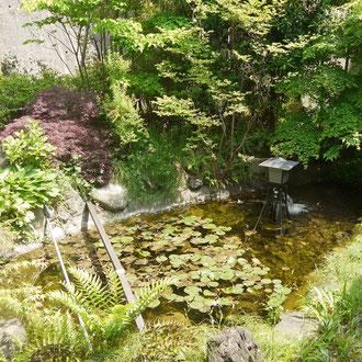 龍神がいるといわれる池