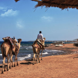 Kamelreiten am Strand von Dahab