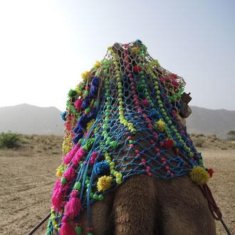 Textile Tour India - Kamel Safari in Pushkar