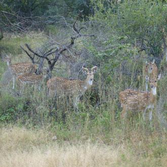 Ranthambore National Park Rajasthan