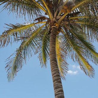 Die Palme mit der schweren Last