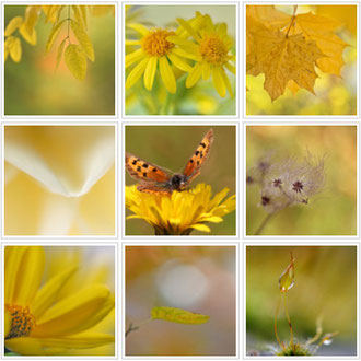 Yellow collection