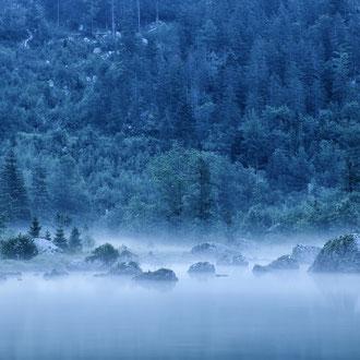 Morgenstimmung auf der Seewiese