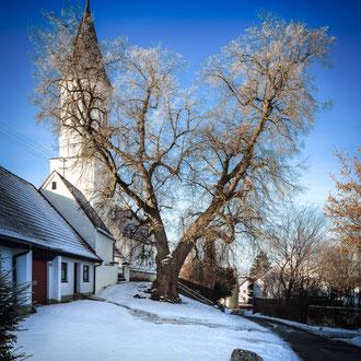 Unsere Naturdenkmal. Die alte Linde im Winter.