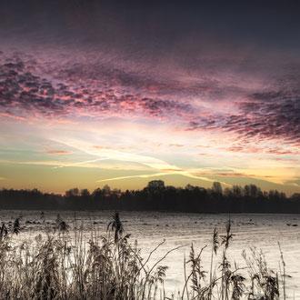 Kurz vor Sonnenaufgang im Moos.