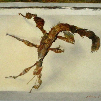 Genia Chef, Maclea`s Spectre Stick Insect, 13 x 18 cm, oil on panel