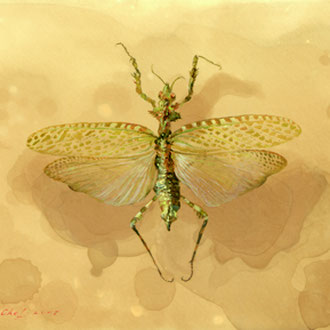 Genia Chef, Praying Mantis with Open Wings, 13 x 18 cm, oil on panel