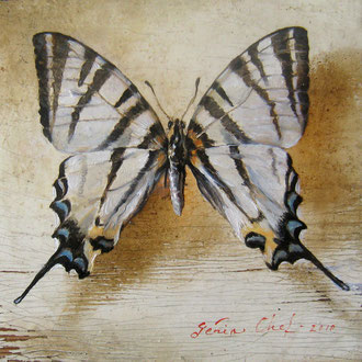 Genia Chef, Machaon, 10 x 10  cm, oil on panel