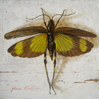 Genia Chef, Grasshopper with Open Wings,  10 x 10  cm, oil on panel