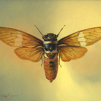 Genia Chef, Giant Tropical Cicada, 14 x 18 cm, oil on panel