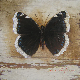 Genia Chef, Butterfly 10 x 10  cm, oil on panel