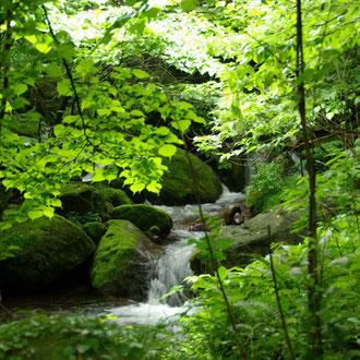 福原の渓流