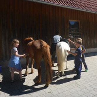 Pferde striegeln