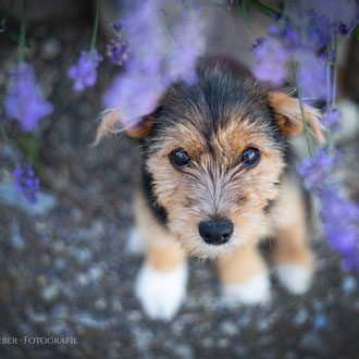 Hundeportrait  fotografie