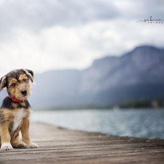 Emotionale Tierfotografie hunde Puppy  Sabina Weber