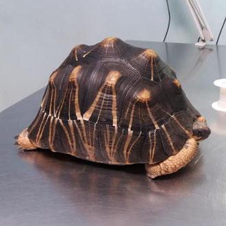 tartaruga veterinario milano