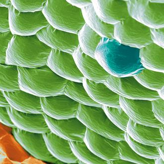 kolorierte Blattoberfläche