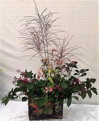 古堀晴香 花材:糸すすき、よつどめ、秋海棠、                           ほととぎす、ねずみもち、グリーンスケール