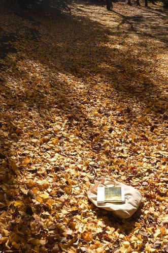 2017年11月10日 今住んでいる町は枯れた畑くらいしかないですが、そのぶんとても静かなので、天気のいい日は外で本を読みます