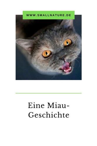 Eine miauende Katze.