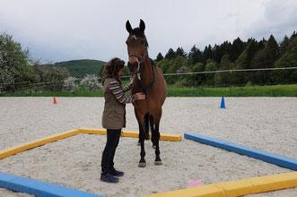 Ängstlich oder unsicher? Ein pferdeunterstütztes Coaching hilft_ horse-feedback.c