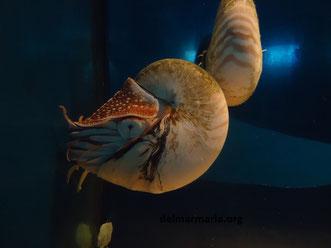 аквариум Барселоны,  экскурсии в аквариум Барселоны
