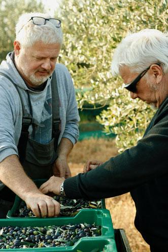Olivenernte mit unseren fleißigen Helferlein
