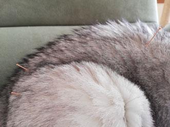 Akupunktur an Katzen, Hunden, Pferden und anderen Tieren