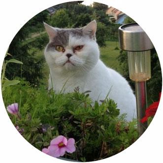 mobile Katzenbetreuung für Pankow