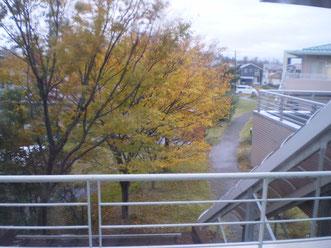 7丁目の廊下から見える晩秋の景色。