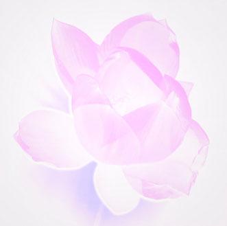 Lotus, Blume, Lotusblume, Bedeutung für Vollkommenheit, Symbol und Sinnbild für Reinheit, Treue, Schöpferkraft und Erleuchtung, © Carmen Weder, Art of Moment