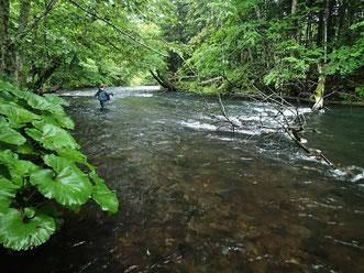 流域は過去ヒグマが出没している場所もある。熊鈴や撃退スプレーなど装備は万全に、セーフティで愉快な釣りを。