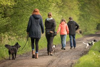 Kleine Gruppen: Modernes Hundetraining in Straelen und Duisburg