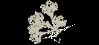 florale verzierung