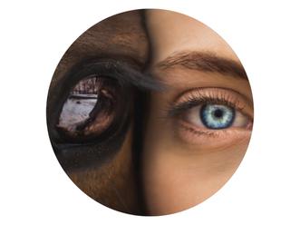 Pferdegestütztes Coaching – Osteopathie Kullmann Hamburg