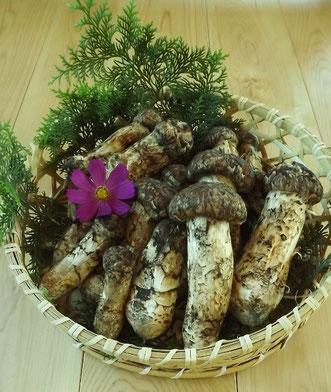 真の日本料理「美菜ガルテンふるかわ」松茸入荷