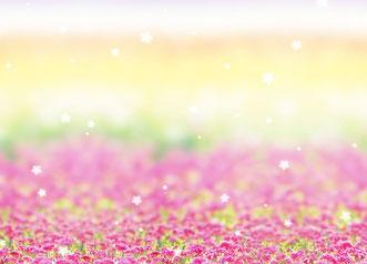 11、お花畑