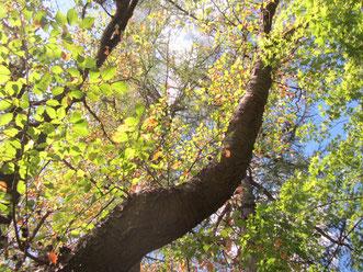 木がまるで、天に昇っていく龍のように見えました。