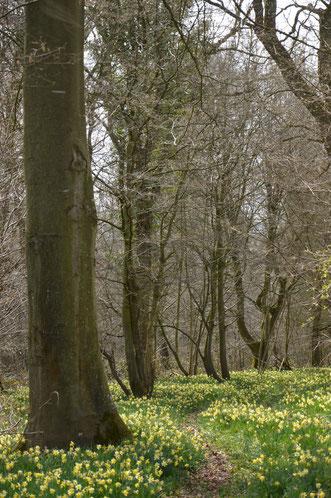 Marche nordique forêt de Crécy et Baie de Somme.