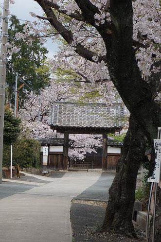 二川宿の東町にある妙泉寺の桜