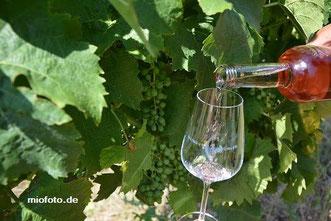 Wein Event in Oldenburg, befüllen des Glases mit Grünler Wein
