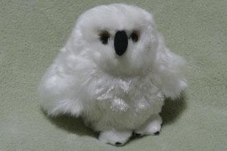 白いフクロウ