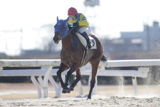 スターギャル号と鞍上の池田敏樹騎手