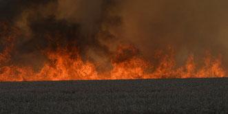 Etwa 80 Hektar Weizen sind durch ein Feuer zwischen Reinstedt und Ermsleben (Landkreis Harz) vernichtet worden. Feuerwehren aus dem Landkreis Harz und dem Salzlandkreis waren vor Ort im Einsatz. Durch den dichten Rauch kam es zu starken Behinderungen.