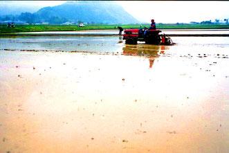die ersten Reisfelder im Tal