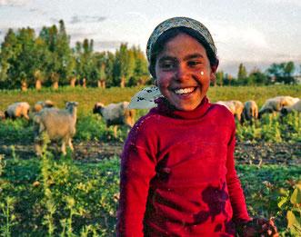 ein kleines Mädchen trieb am Spätnachmittag eine Schafherde zurück
